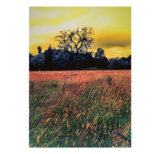 River Meadow Greeting Card Product Image